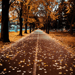 freetoedit autumn fall leaves street