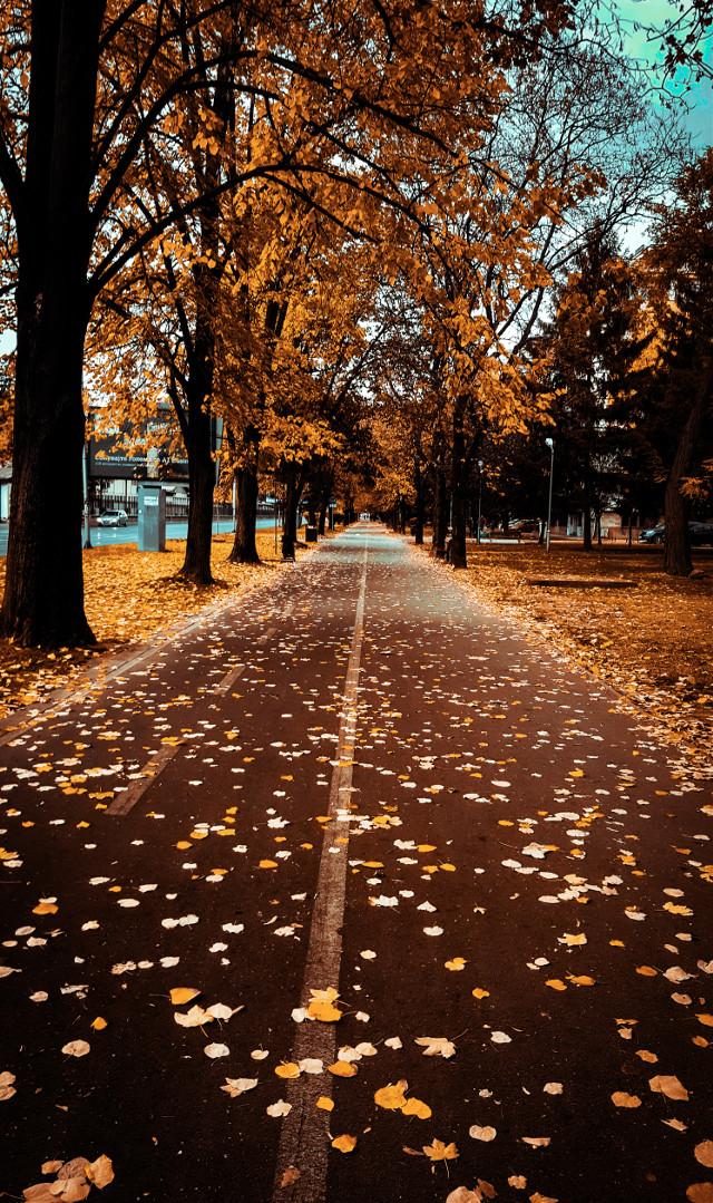 #freetoedit #autumn #fall #leaves #street #trees