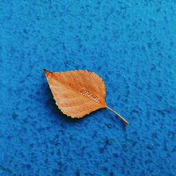 freetoedit leaf yellow myclick