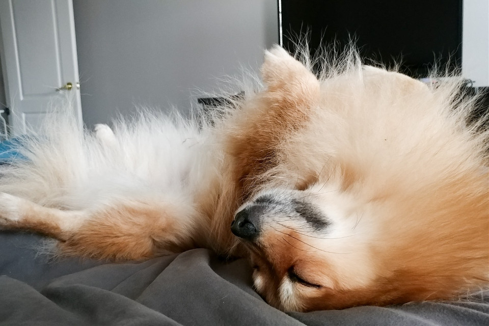 My sweet Shinobu 😍🐕 #freetoedit