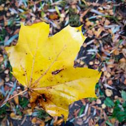 leaf photography photoart autumn cold freetoedit