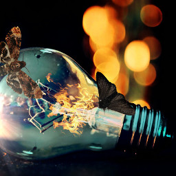 freetoedit lightbulb moth lighteffects flames