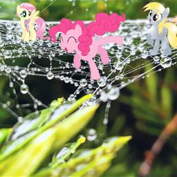 freetoedit mlp spiderweb web dew