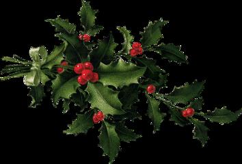 christmas holly freetoedit