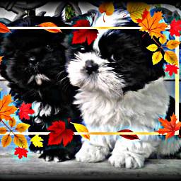 freetoedit puppies cute petsandanimals dogs srcautumnframe autumnframe