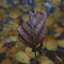 leaf nature outandabout