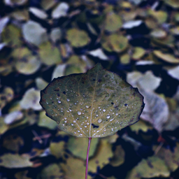 nature leaf waterdrops closeup outandabout freetoedit