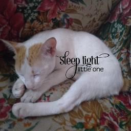 freetoedit cat pet sleep pet