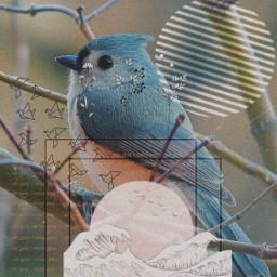 freetoedit remixed remixit bird petsandanimals