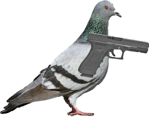 pigeon gun meme funny weird freetoedit
