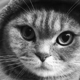 photography animal cat mylove mycat freetoedit