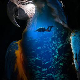 freetoedit bird doubleexposure underwater ocean