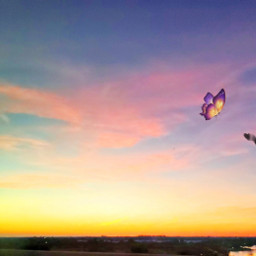 freetoedit butterfly skyline