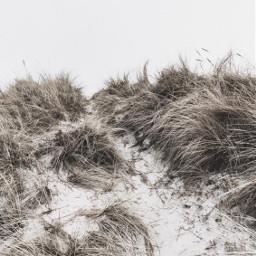 nature beachdunes grass monochromatic naturephotography freetoedit