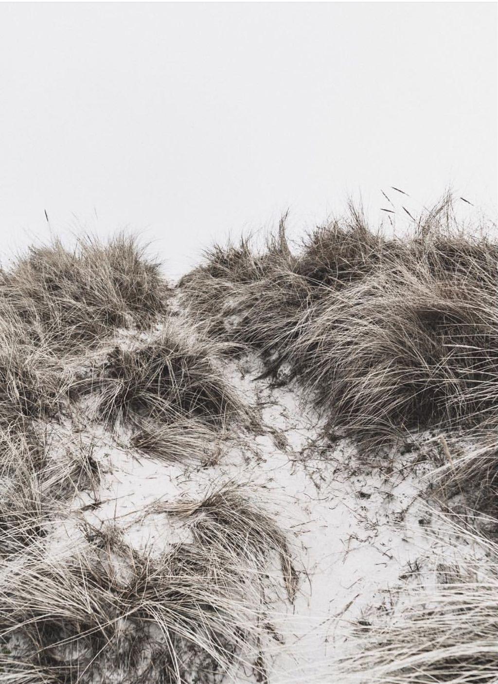 #nature #beachdunes #grass #monochromatic #naturephotography   #freetoedit