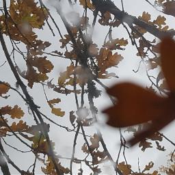 freetoedit feuilles autom pluie @lauriv-r