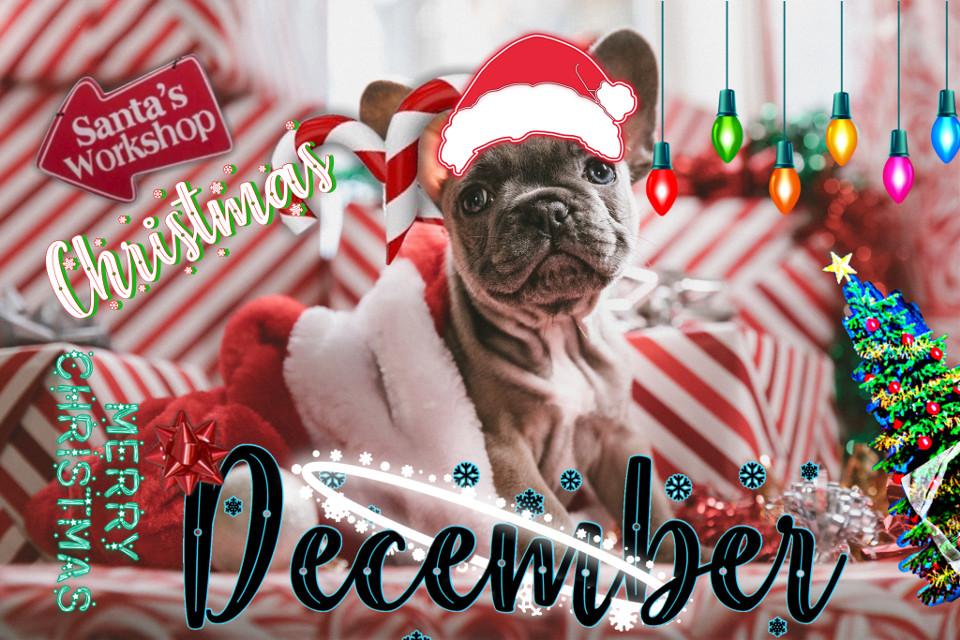 #chrismas #december #winter #cute #dog #freetoedit