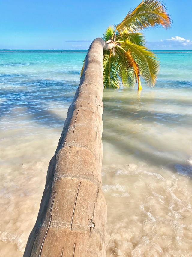 #beach #vaca #puntacana #palmtree