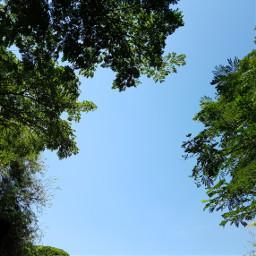 bluesky tropics leaves nofilter smartphonephotography