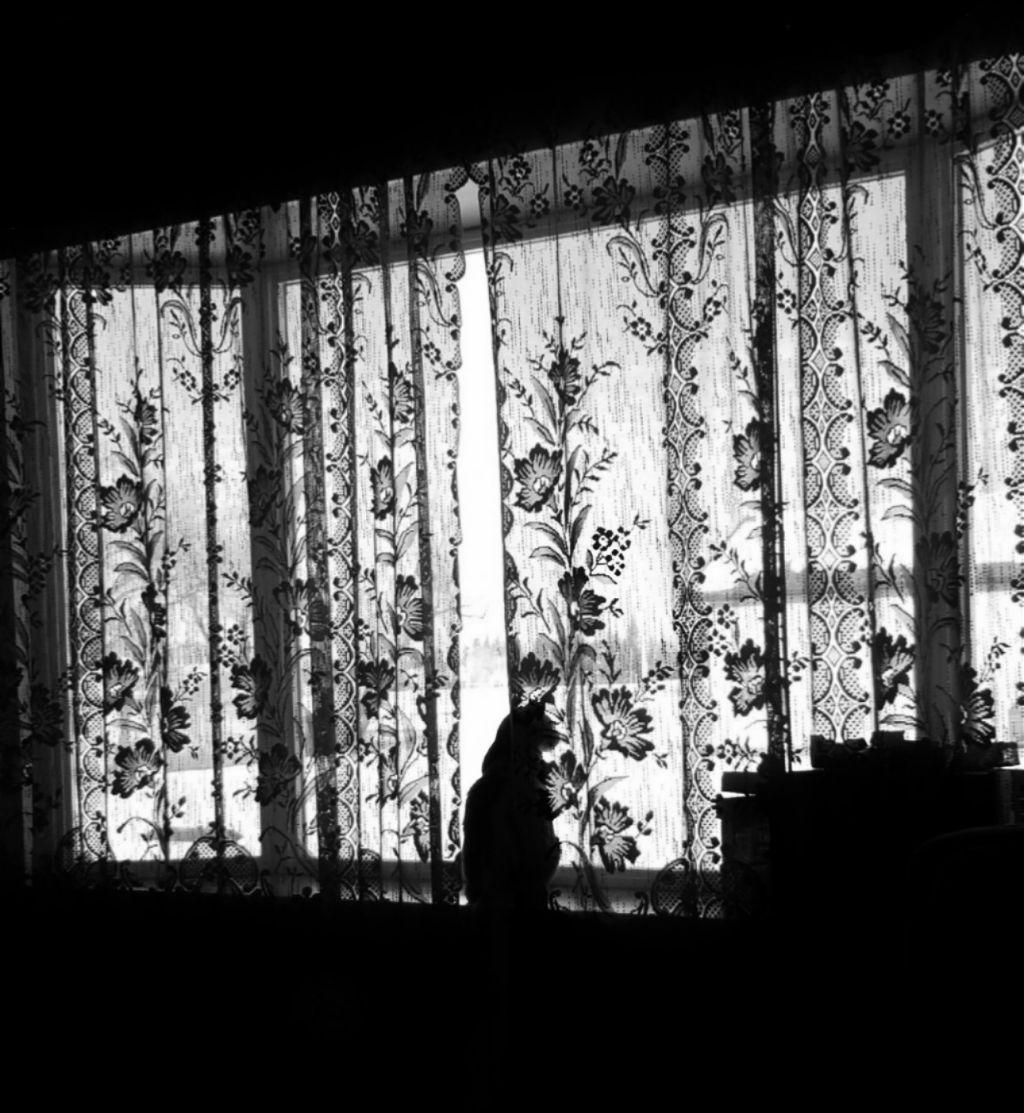 A higher contrast B&W photo of Garfield #catsofpicsart