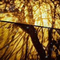 shadows treeart my freestyle abstractart