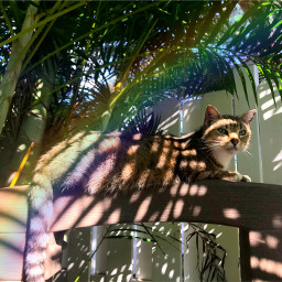 freetoedit rainbow cat tabbycat tabby