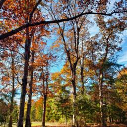 autumn naturephotography fallcolors leaves woods