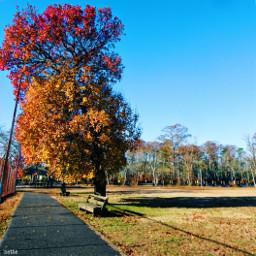 freetoedit autumn myoriginalphoto