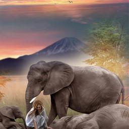 freetoedit nature landscape wildlife elephants