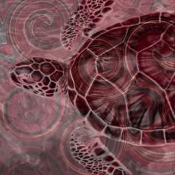 freetoedit turtle redblackwhiteseries beach blackandwhite