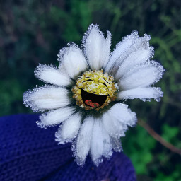 daisy frozen ice happiness stickers freetoedit