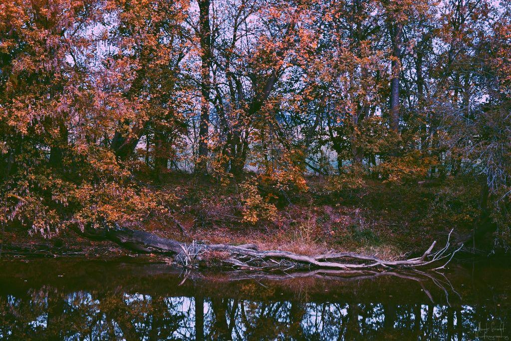 #myphotography #myphoto #nature #flower #drama #peddles #picsart #sun #nikon #beautiful #dramatic #leaf #grass #myoriginalphoto #life #pa #color #shadow