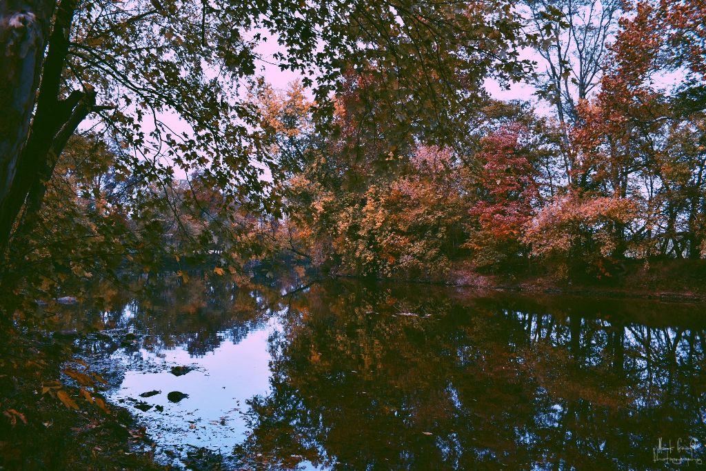 #freetoedit #myphotography #myphoto #nature #flower #drama #peddles #picsart #sun #nikon #beautiful #dramatic #leaf #grass #myoriginalphoto #life #pa #color #shadow