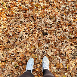 freetoedit leaves autumn