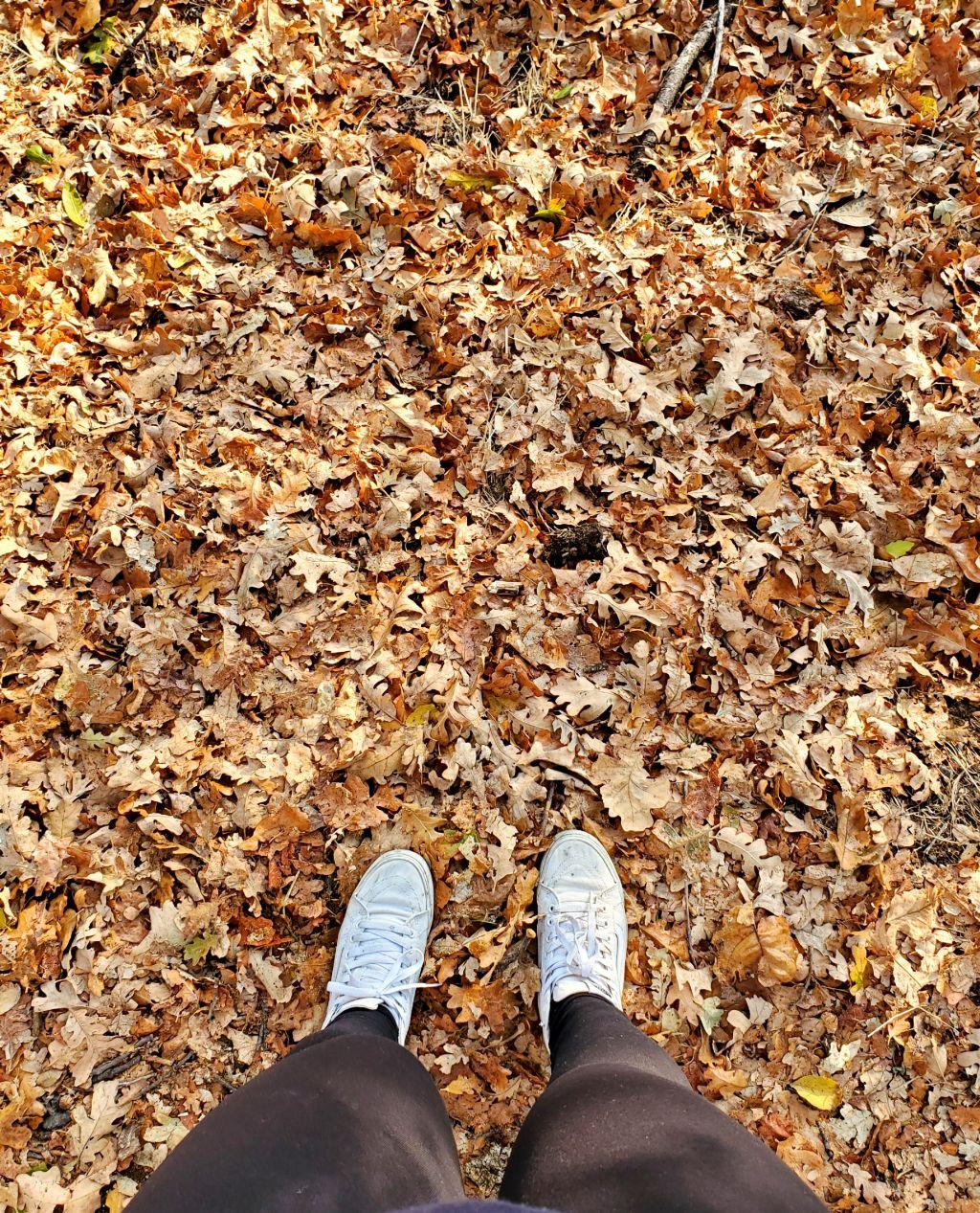 #leaves #autumn #freetoedit