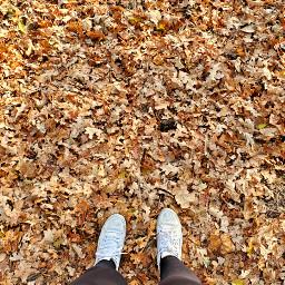 freetoedit leaves autumn