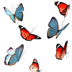 stickers butterflys colorful fly colors freetoedit