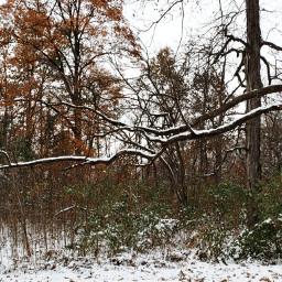 photography landscape snow branch tree freetoedit