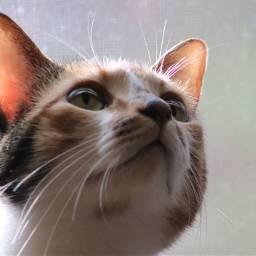 freetoedit nofilter noedit cats animals