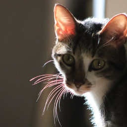 freetoedit fitz grandcat colorful photography