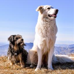 freetoedit brotherhood doglover dogday dogsofpicsart pcfamily