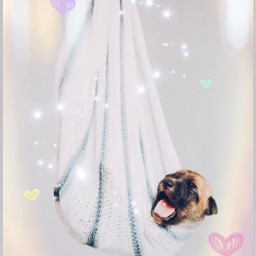 freetoedit pleasevote competition irchappypuppy happypuppy