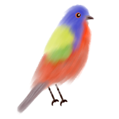 ftestickers watercolor painting bird colorful freetoedit