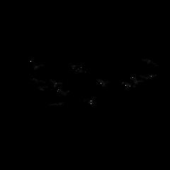 ftestickers birds flock silhouette freetoedit
