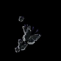 ftestickers butterflies 3deffect blackandwhite freetoedit