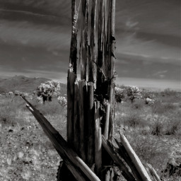 freetoedit dead cactus blackandwhite myphotography