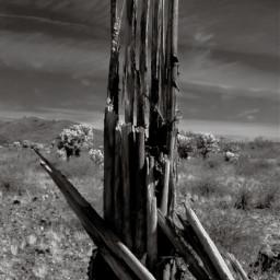 freetoedit dead cactus blackandwhite myphotography