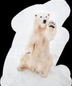 polarbear freetoedit scpolarbear