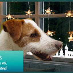 freetoedit 22moredsys dog puppy petsandanimals