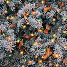 freetoedit stringlightsbrush holiday christmas newyear